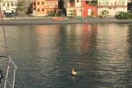 Owen snorkels off St Pierre